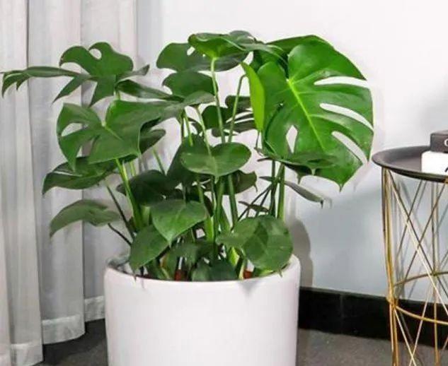 """家里有异味,就养4种花,被称""""天然净化器"""",空气好没异味"""